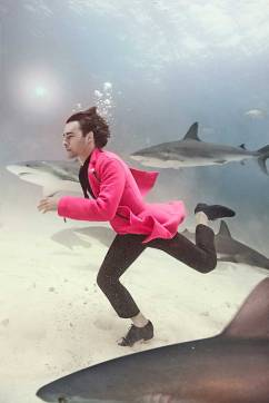 fashion-ft4-shark-2
